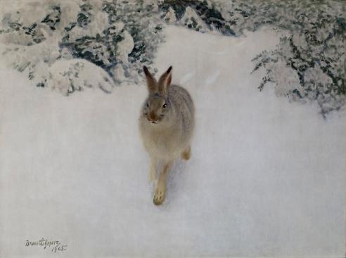 Vinterhare_1905-492x367_komp